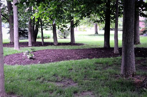 Mulched Yard