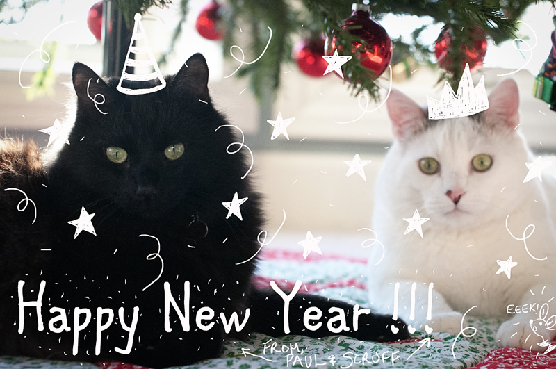 New Year Kitties